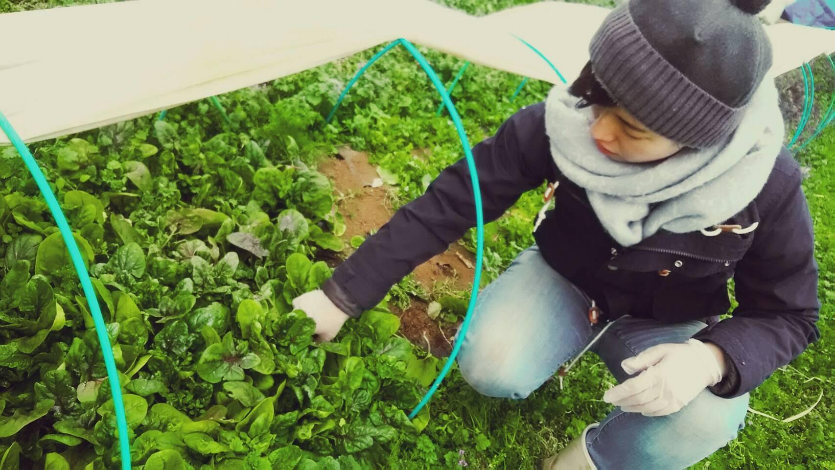 今朝は 芽キャベツ 人参 蕪 ほうれん草 カーヴォロネーロ ブロッコリーの収穫_c0222448_11552762.jpg