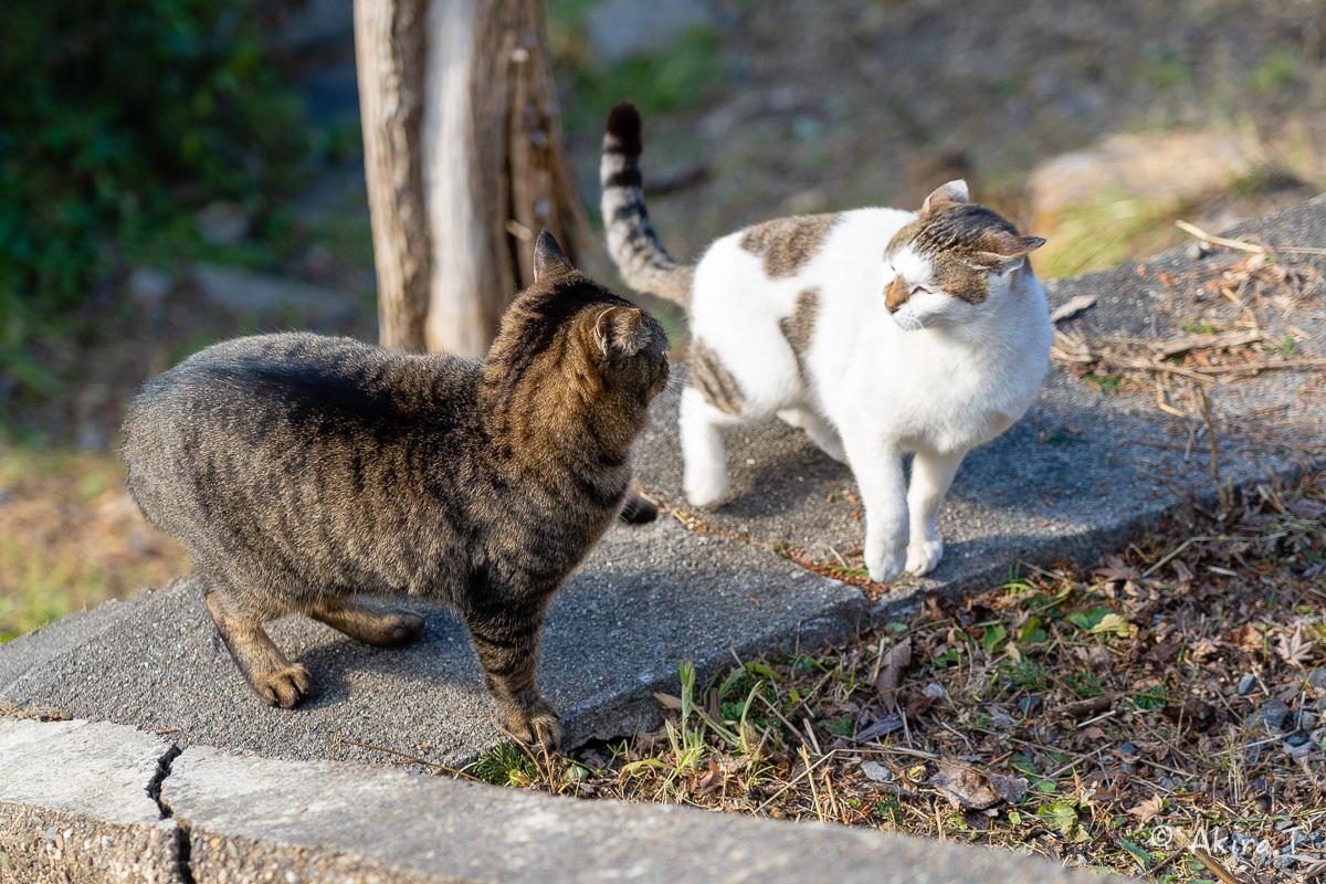 〜岩合光昭に挑戦〜 京都ネコ歩き -19-_f0152550_18124182.jpg
