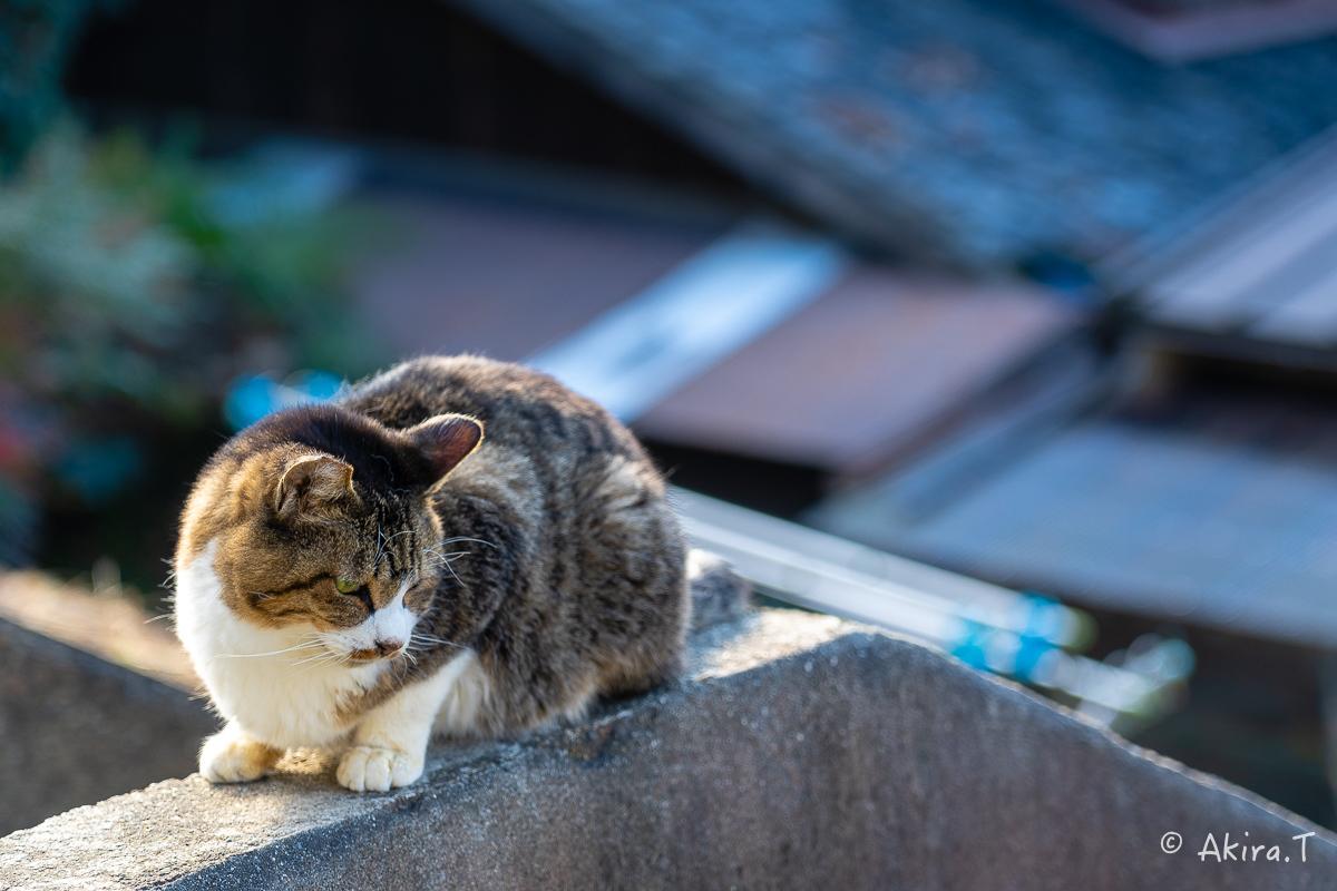 〜岩合光昭に挑戦〜 京都ネコ歩き -19-_f0152550_18125611.jpg