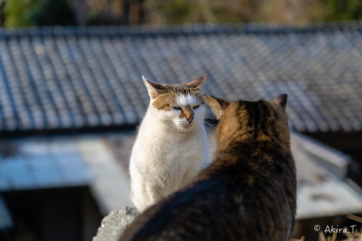 〜岩合光昭に挑戦〜 京都ネコ歩き -19-_f0152550_18130873.jpg