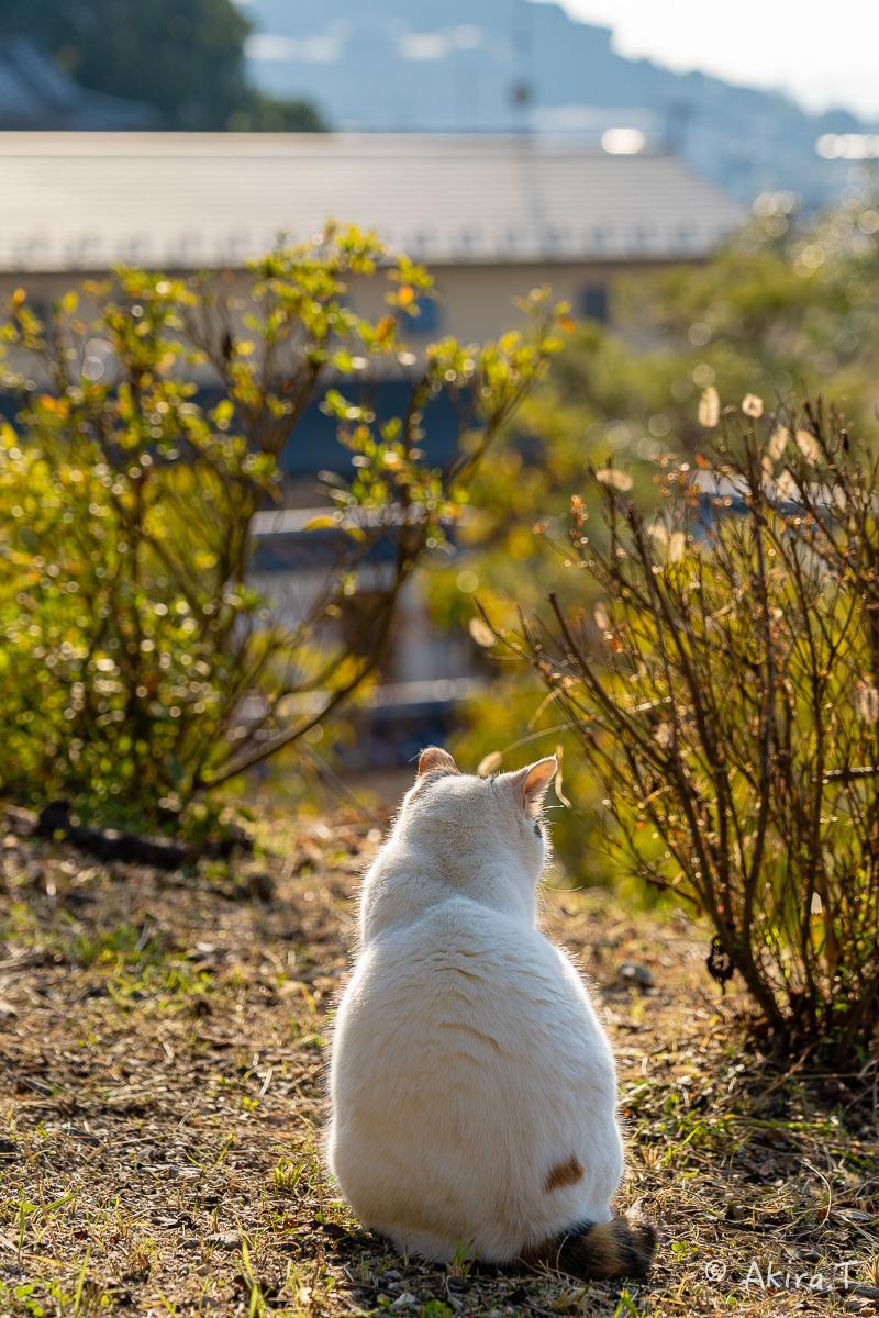 〜岩合光昭に挑戦〜 京都ネコ歩き -19-_f0152550_18150519.jpg