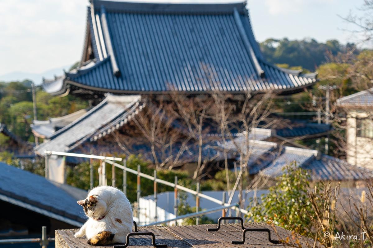 〜岩合光昭に挑戦〜 京都ネコ歩き -19-_f0152550_18151477.jpg