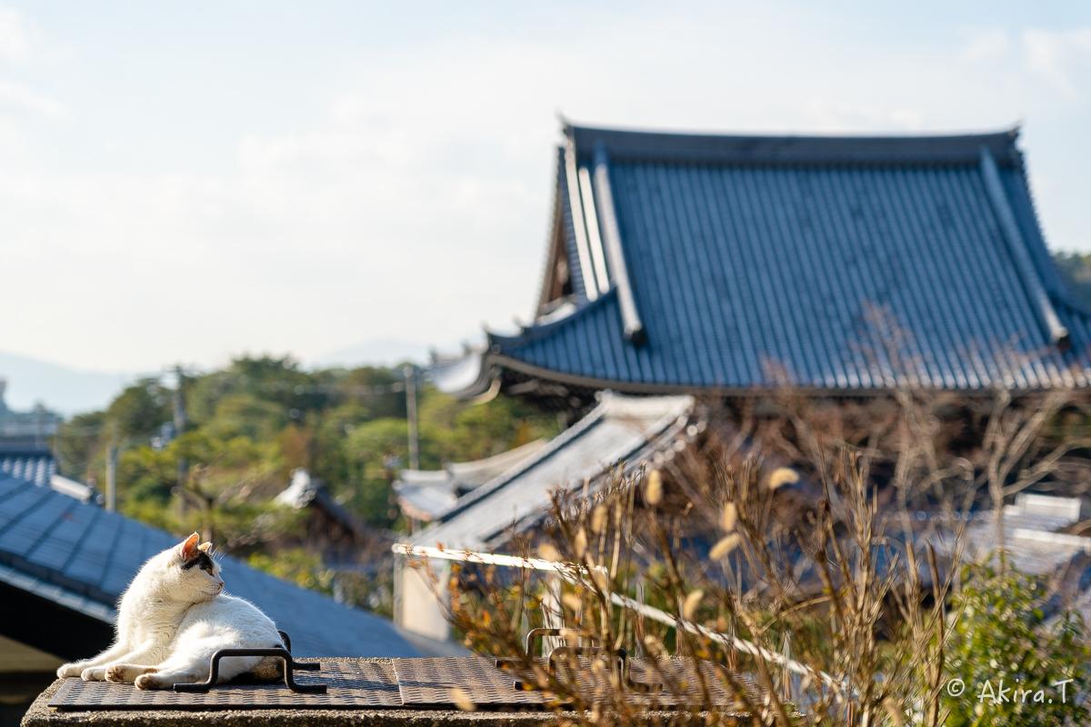 〜岩合光昭に挑戦〜 京都ネコ歩き -19-_f0152550_18161343.jpg