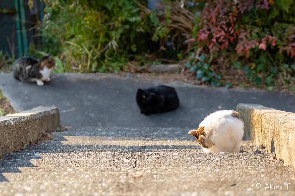 〜岩合光昭に挑戦〜 京都ネコ歩き -19-_f0152550_18182909.jpg