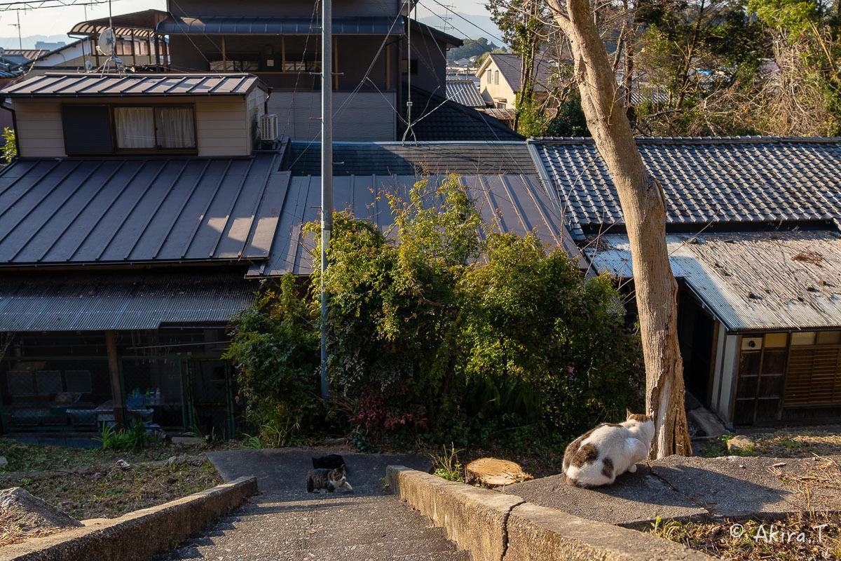 〜岩合光昭に挑戦〜 京都ネコ歩き -19-_f0152550_18184291.jpg