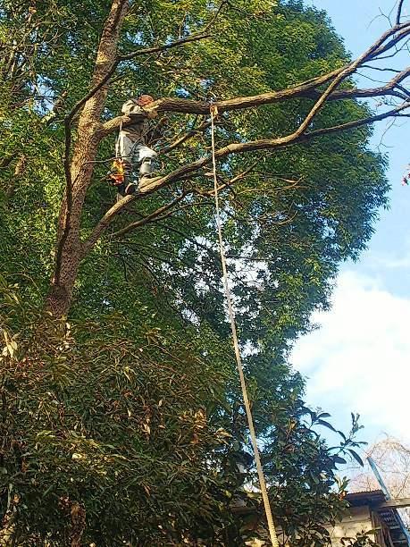 木を伐る_e0303187_22181378.jpg