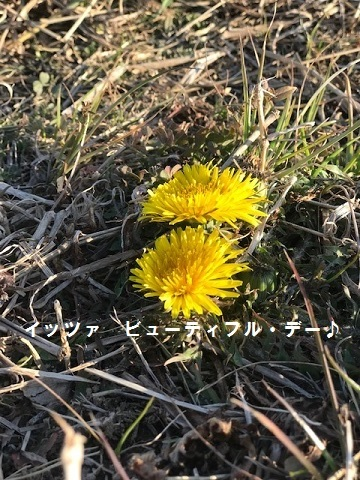 ビューティフル・サンデー♪_f0242002_11452195.jpg