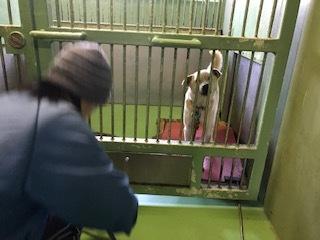 【犬・移動先募集】センター(支所)収容(3/30訪問)_f0242002_15325070.jpg