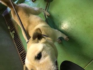 【犬・移動先募集】センター(支所)収容(3/30訪問)_f0242002_15325567.jpg