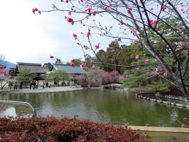 梅宮大社 梅が咲き始めた_e0048413_16032090.jpg