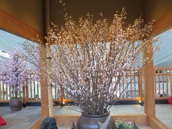 桜が満開_c0192215_182855100.jpg