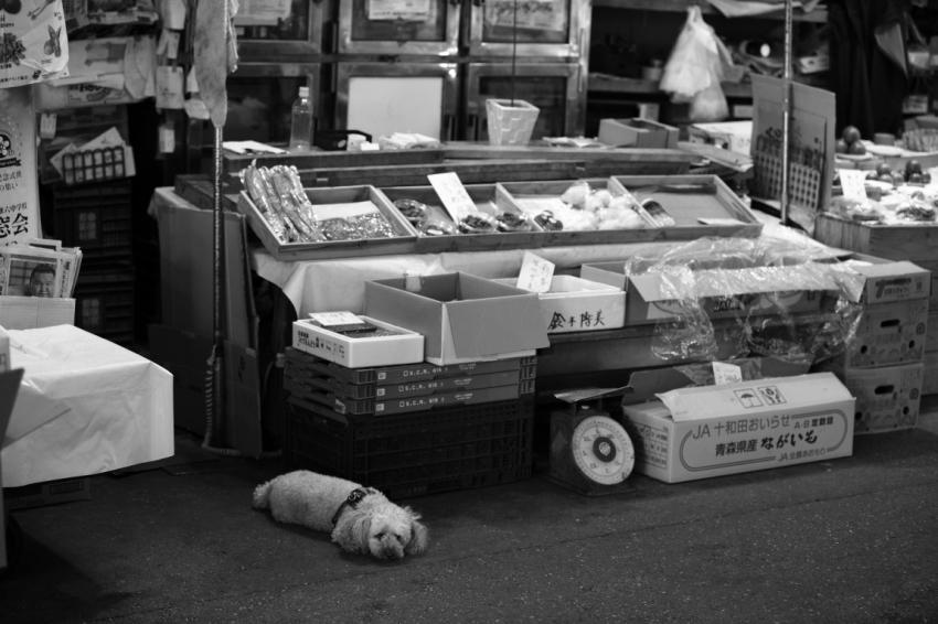 「夏」が好きな人~金沢近江町市場にて~_d0349418_20540010.jpg