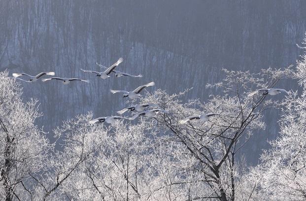 日本画のように 2月18日_f0113639_17075192.jpg