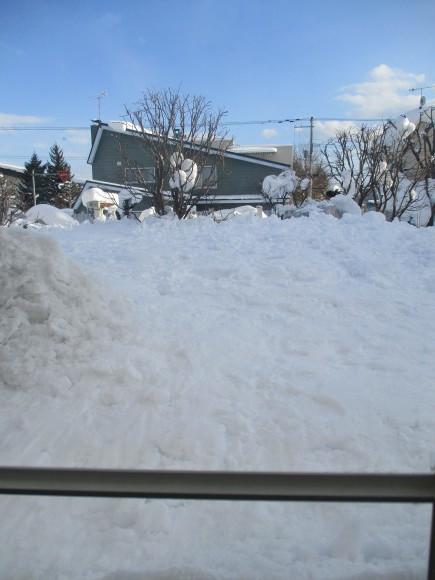 予約した病院へ&お庭のパーゴラが壊れた!!!_a0279743_16053206.jpg
