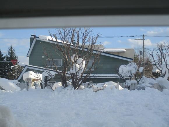 予約した病院へ&お庭のパーゴラが壊れた!!!_a0279743_16061569.jpg