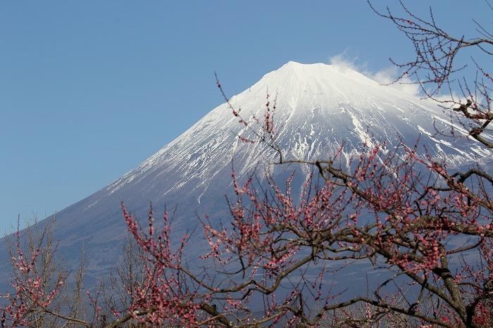 富士山_c0385854_06550468.jpg