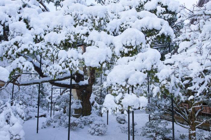 京都 大原雪景色 2019_f0021869_23015922.jpg