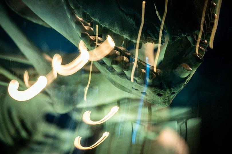 重層的な光蜥蜴が棲む水族館_d0353489_15405829.jpg