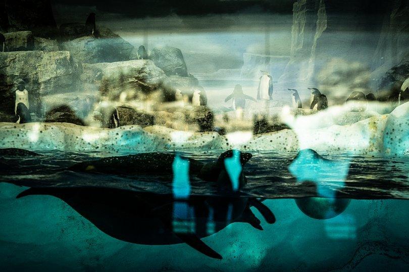 重層的な光蜥蜴が棲む水族館_d0353489_15413377.jpg