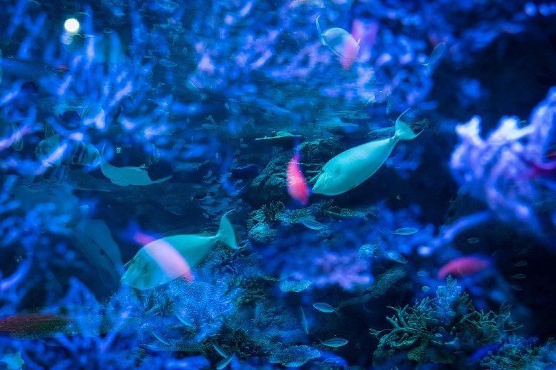 重層的な光蜥蜴が棲む水族館_d0353489_15422007.jpg