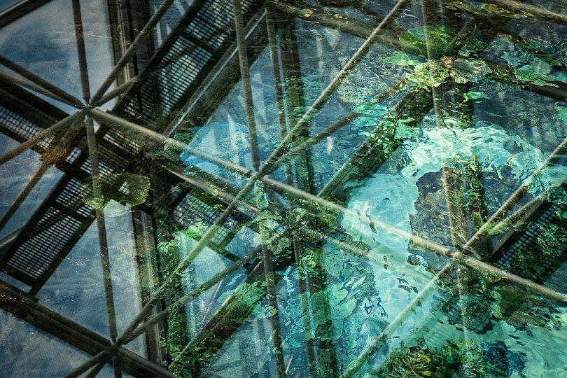 重層的な光蜥蜴が棲む水族館_d0353489_15473850.jpg