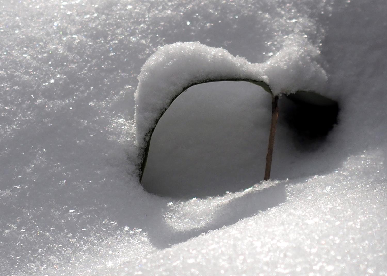 金剛山雪のオブゼ_e0254493_0101355.jpg