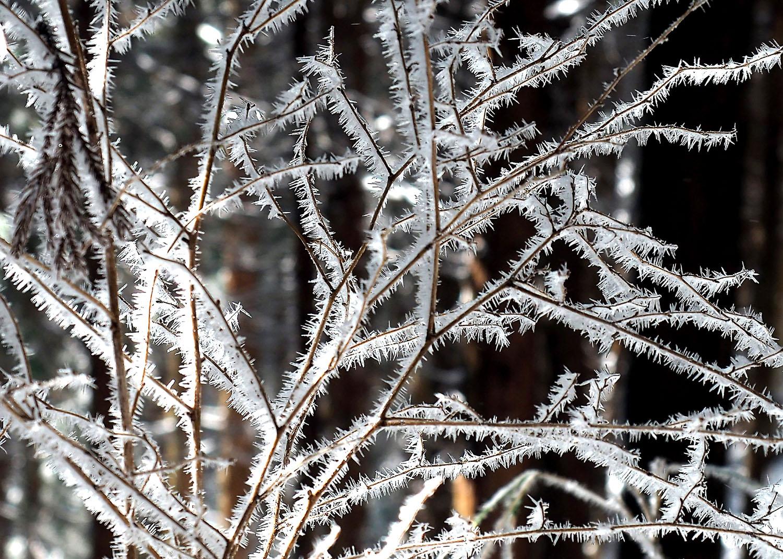 金剛山雪のオブゼ_e0254493_061213.jpg