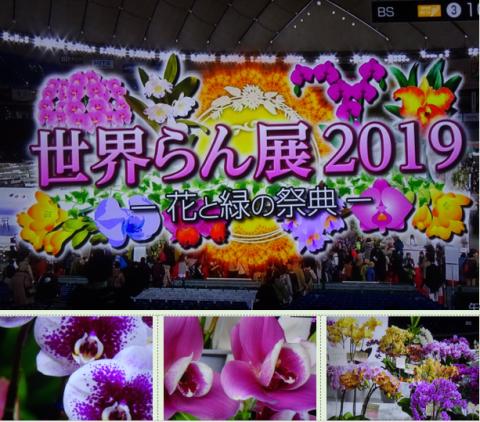 世界らん展2019~花と緑の祭典~BSプレミアム再放送…2019/2/19_f0231709_17005533.png
