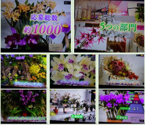 世界らん展2019~花と緑の祭典~BSプレミアム再放送…2019/2/19_f0231709_17010871.png
