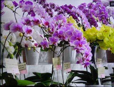 世界らん展2019~花と緑の祭典~BSプレミアム再放送…2019/2/19_f0231709_17011923.png