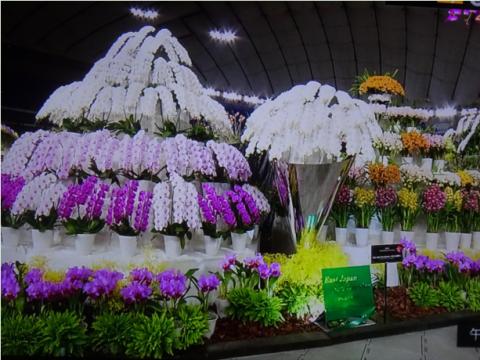 世界らん展2019~花と緑の祭典~BSプレミアム再放送…2019/2/19_f0231709_17064122.png
