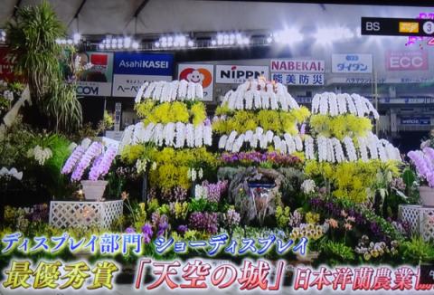 世界らん展2019~花と緑の祭典~BSプレミアム再放送…2019/2/19_f0231709_17081427.png