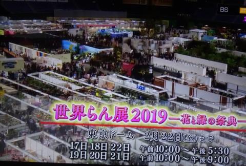 世界らん展2019~花と緑の祭典~BSプレミアム再放送…2019/2/19_f0231709_17085120.png