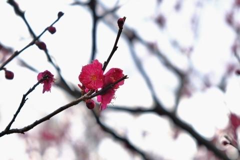 鎌倉五山と三十三観音巡り_e0000910_11380921.jpg