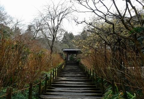 鎌倉五山と三十三観音巡り_e0000910_12174349.jpg