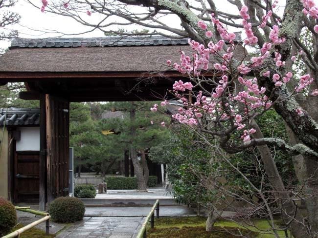 大徳寺と今宮神社 梅花咲き始め_e0048413_21053093.jpg