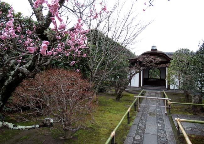 大徳寺と今宮神社 梅花咲き始め_e0048413_21053441.jpg