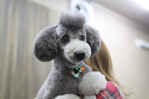 2月17日ご来店のワンちゃんです!!_b0130018_09294671.jpg