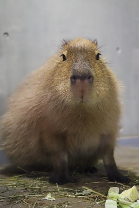 【旭山動物園】北海道旅行 - 2 -_f0348831_21485842.jpg