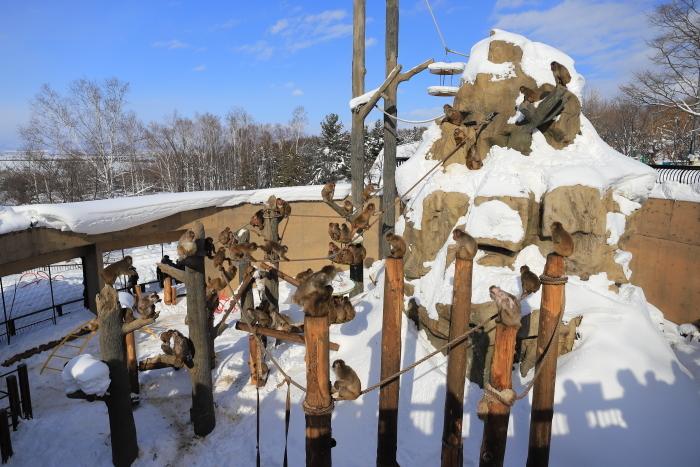 【旭山動物園】北海道旅行 - 2 -_f0348831_21492331.jpg