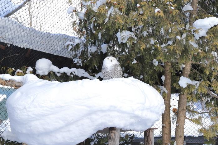 【旭山動物園】北海道旅行 - 2 -_f0348831_21492341.jpg