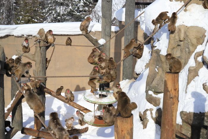 【旭山動物園】北海道旅行 - 2 -_f0348831_21492384.jpg