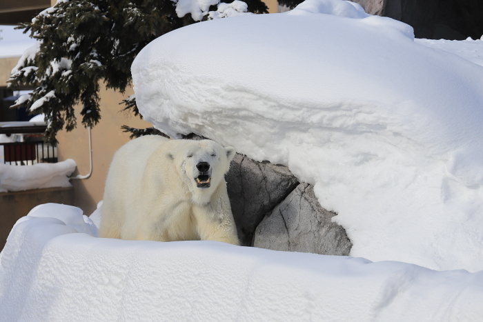 【旭山動物園】北海道旅行 - 2 -_f0348831_21500602.jpg