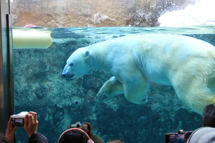 【旭山動物園】北海道旅行 - 2 -_f0348831_21500715.jpg