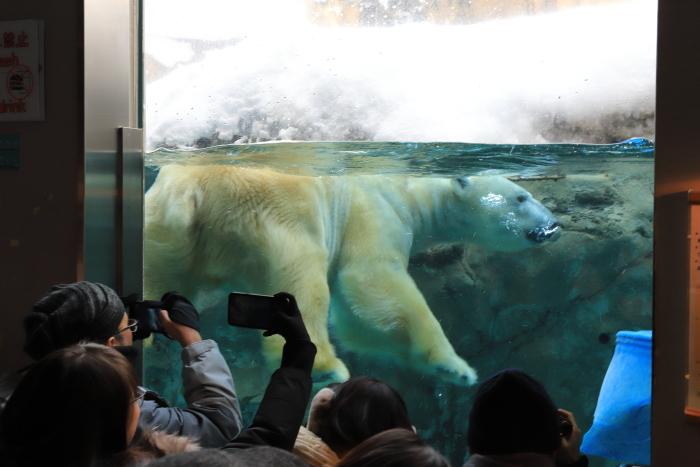 【旭山動物園】北海道旅行 - 2 -_f0348831_21500756.jpg