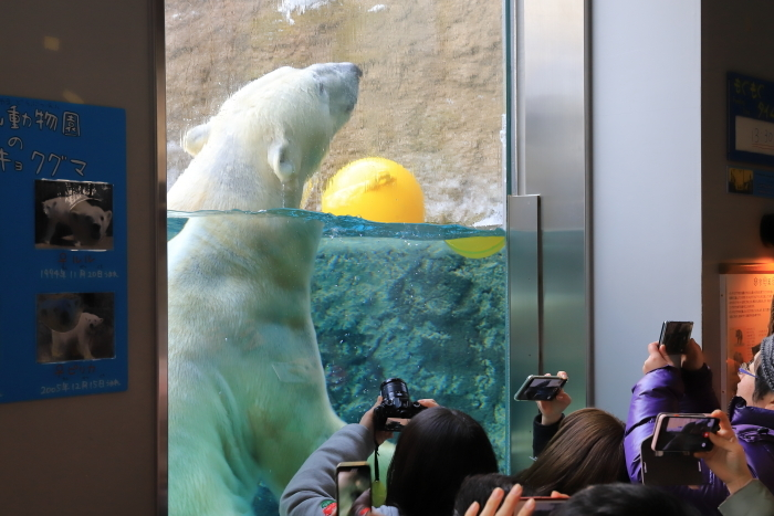 【旭山動物園】北海道旅行 - 2 -_f0348831_21500772.jpg