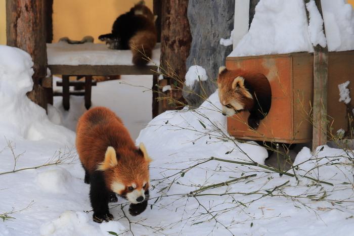 【旭山動物園】北海道旅行 - 2 -_f0348831_21502652.jpg