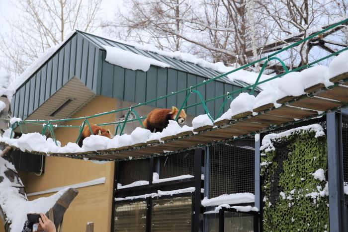 【旭山動物園】北海道旅行 - 2 -_f0348831_21502691.jpg