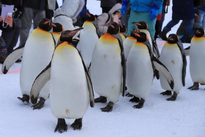 【旭山動物園/ペンギンのお散歩】北海道旅行 - 3 -_f0348831_22122406.jpg