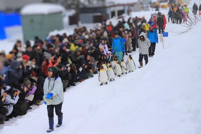 【旭山動物園/ペンギンのお散歩】北海道旅行 - 3 -_f0348831_22504914.jpg